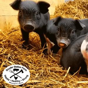 Central Maine Pigs Souder Station Farm
