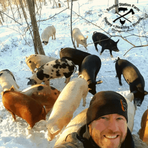 Forest Pigs raised naturally outdoors in winter