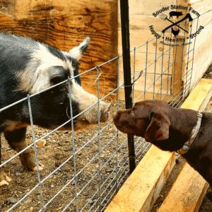 MeatBack Outland Farm and Hershey